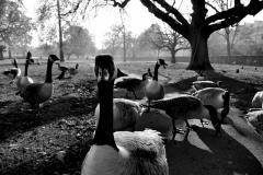 Regents Park, London  © Rebecca Vassie, 2015